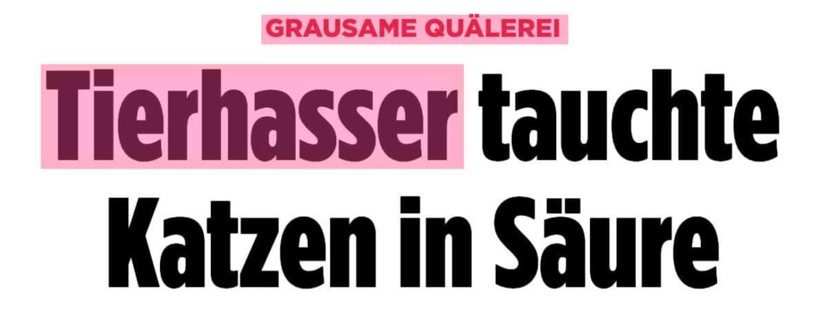 Artikel bei Bild.de: Grausame Quälerei - Tierhasser tauchte Katzen in Säure